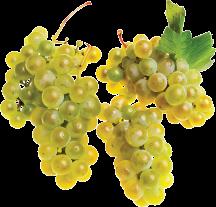 Organic Produce Grapes PLU 94022 product image.