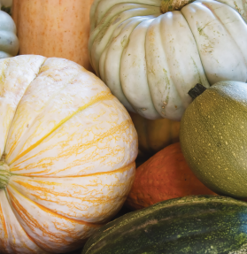 Organic Winter Squashes (with Pumpkin) product image.